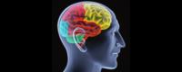 impact des lipides sur cerveau